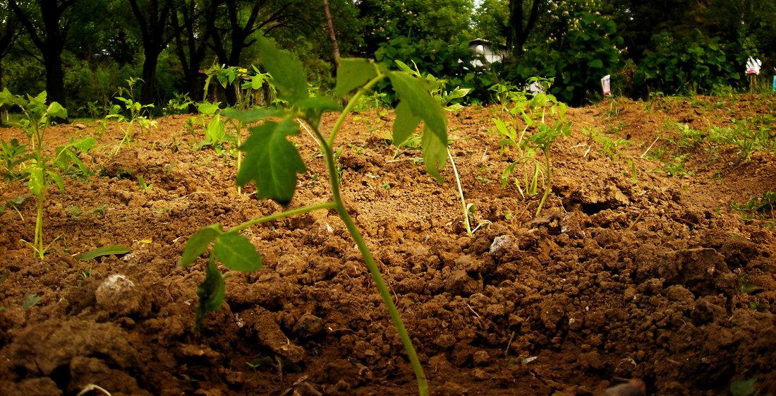 poljoprivreda, usevi, povrtarstvo, setva, vlaga, abr