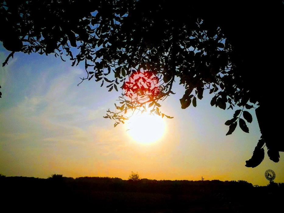 sunce,, suncano