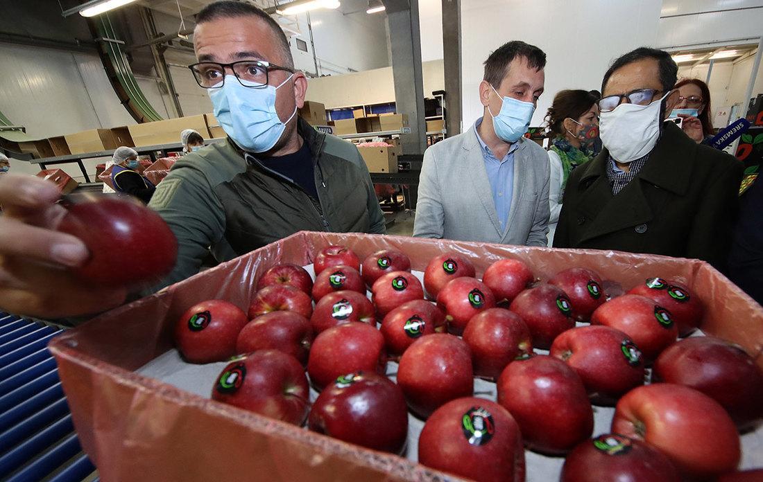 nedimovic, jabuke