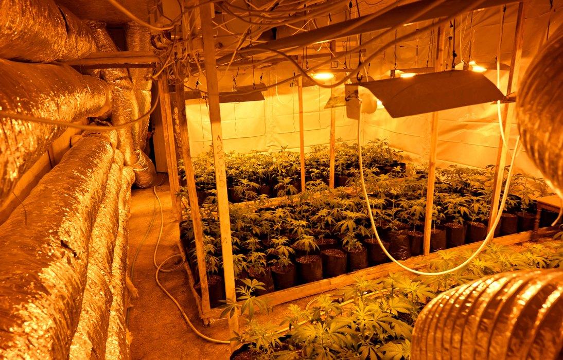 laboratorija,, marihuana
