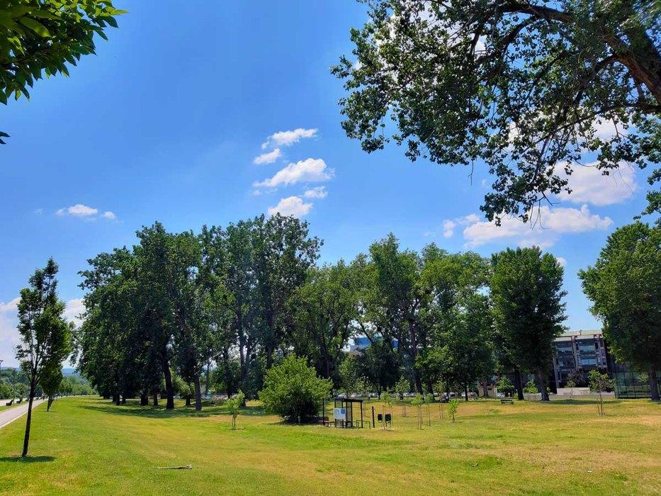 prognoza, vreme, leto, suncano, toplo, priroda, zelenilo, drvece
